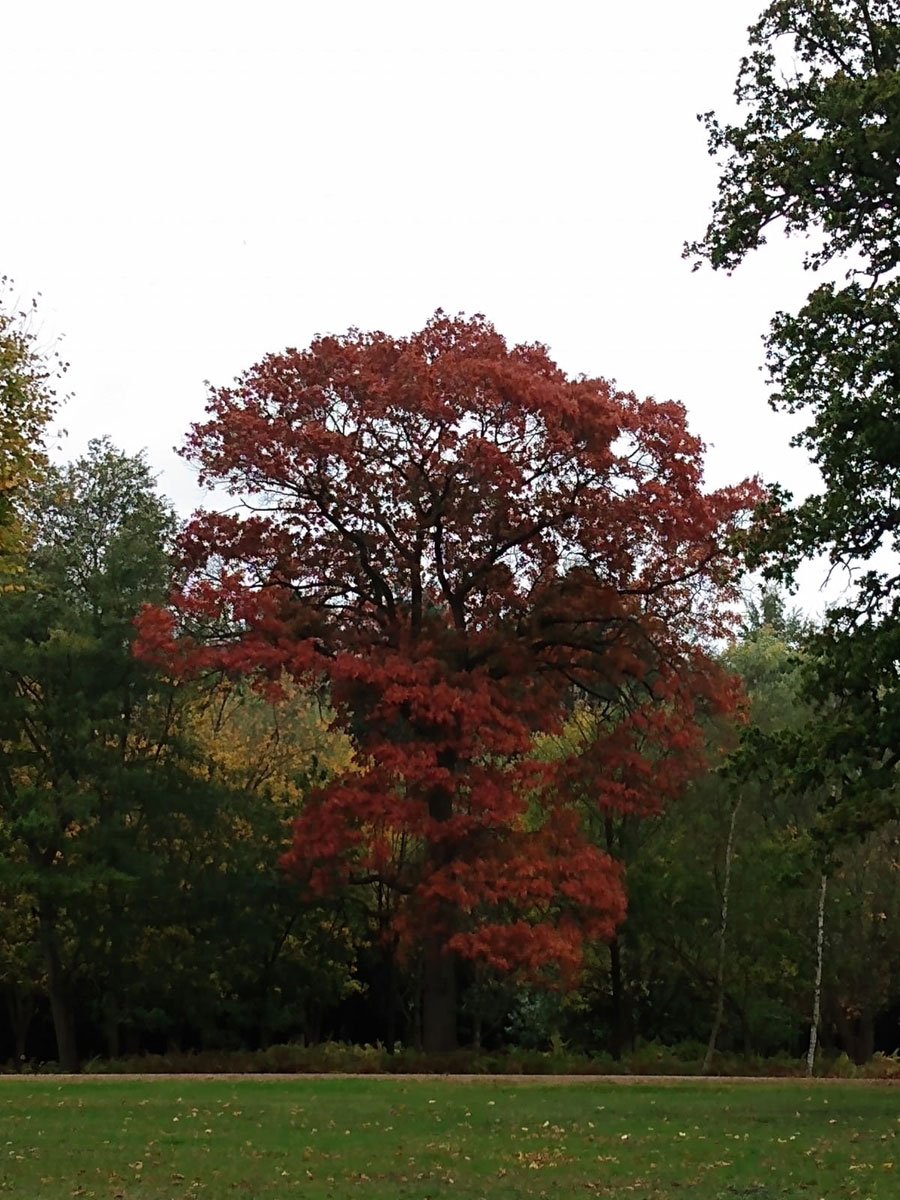 Autumn Colours, Virginia Water Lake, Egham, Surrey, UK
