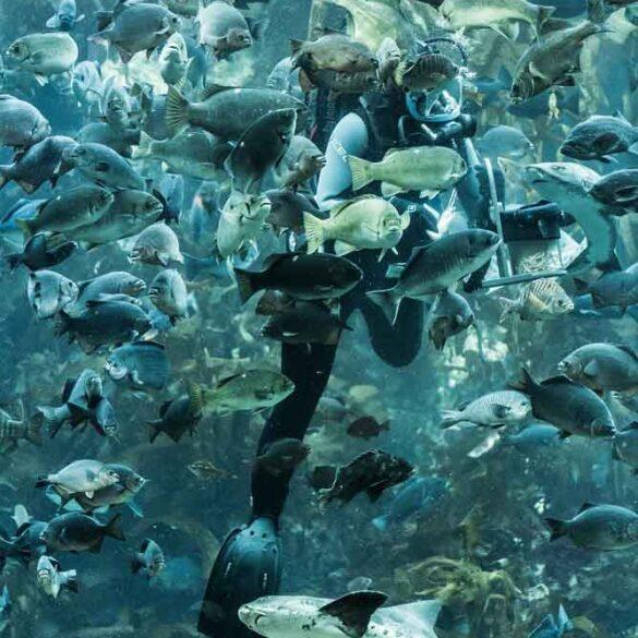 Feeding Time, Monterey Aquarium in California