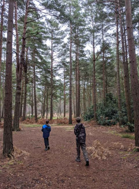 Hiking in the woods with Kids