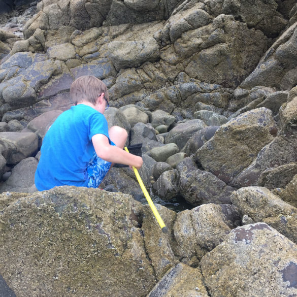 Rock pool fun, Saundersfoot, Wales