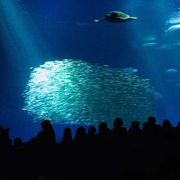 Monterey Bay Aquarium Sardine Shoal