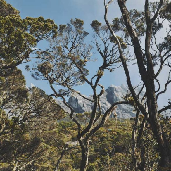 View of Mount Kinabalu through trees at National Park