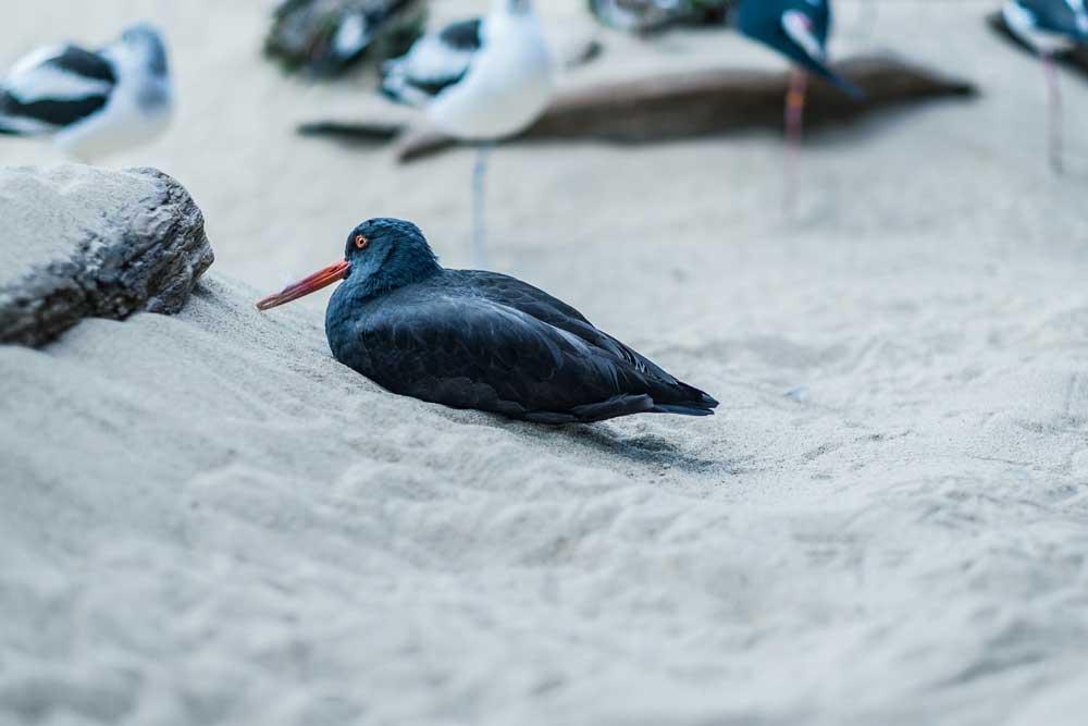 Sea Birds, Monterey Aquarium