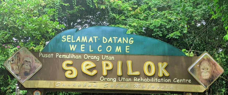 Welcome to Sepilok Orangutan Rehabilitation Centre in Borneo