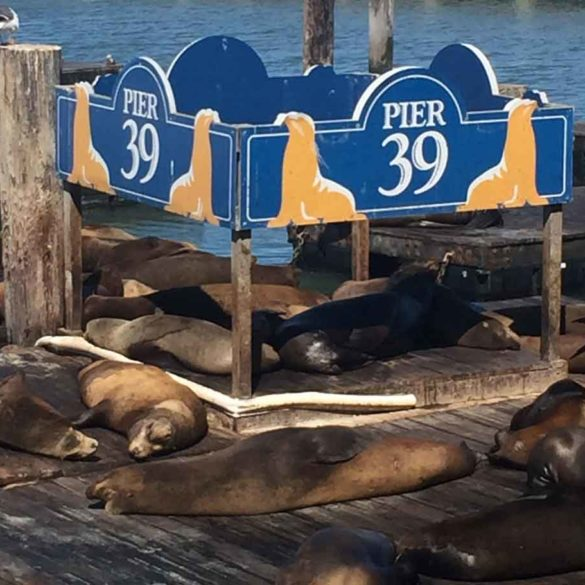 Sea Lions sunning themselves at Pier 39 in San Francisco, California