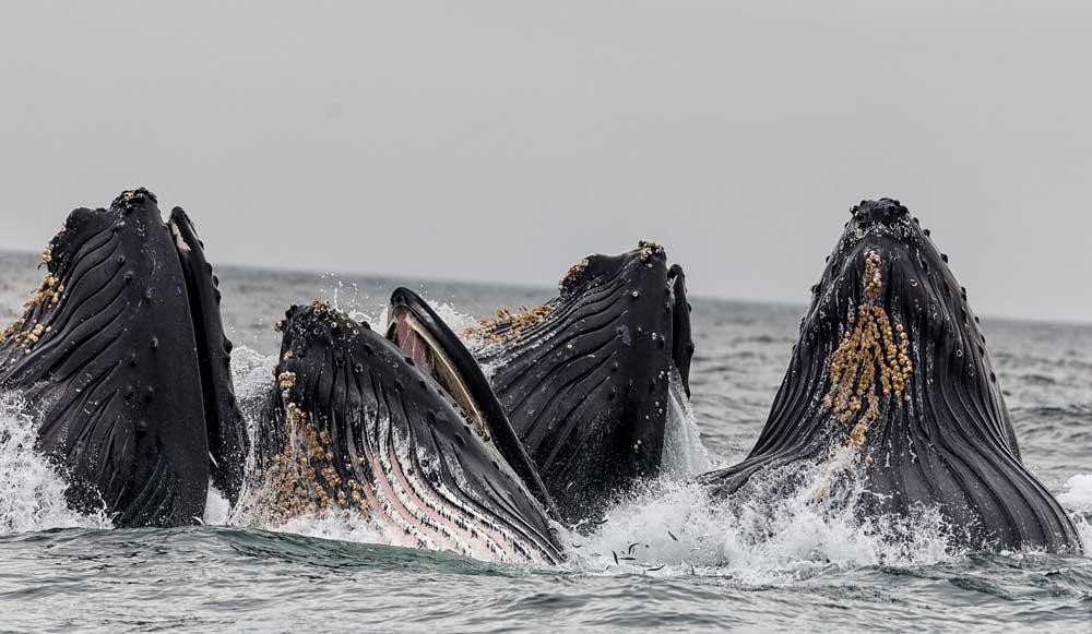 Whales at Monterey Bay, California
