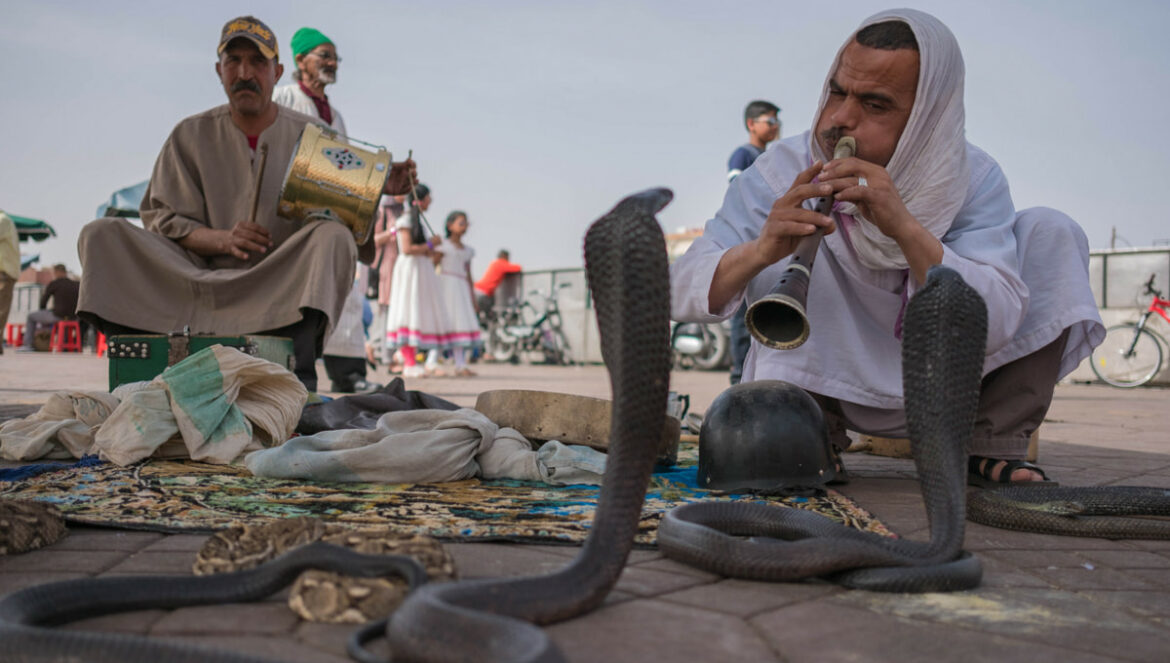 Moroccan traditional snake charming culture in the medina Marrakech
