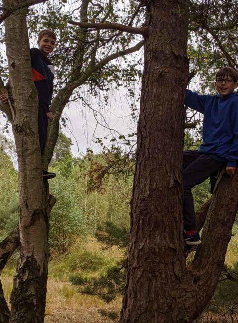 Get Active, Tree Climbing