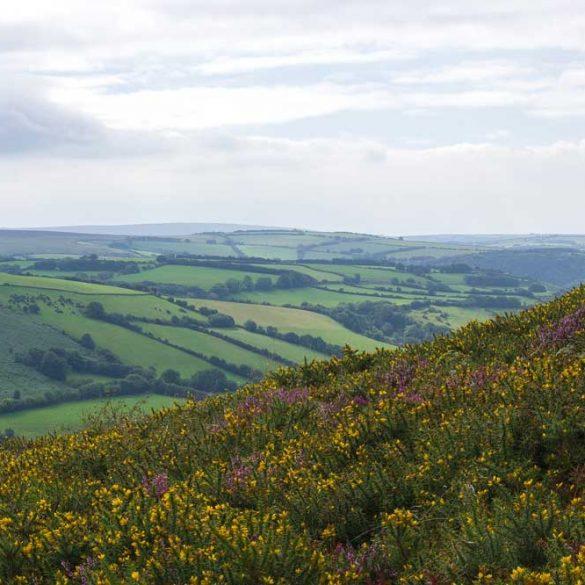 view of wildflowers on hill overlooking Exmoor