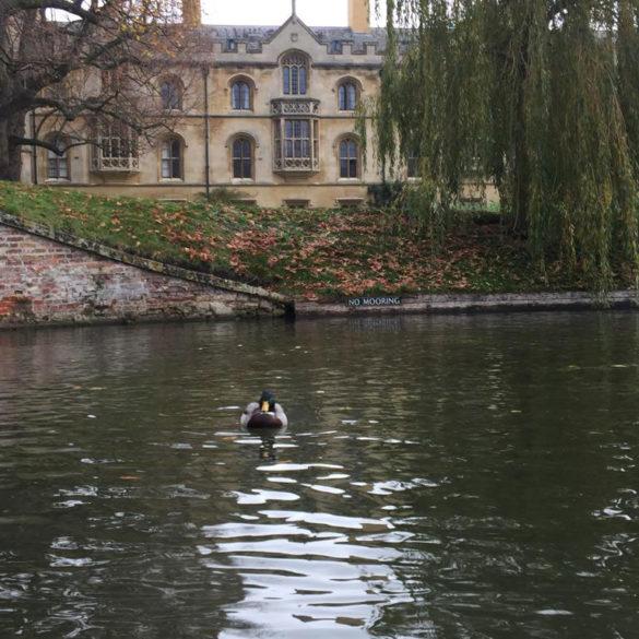 The backs, Cambridge, UK