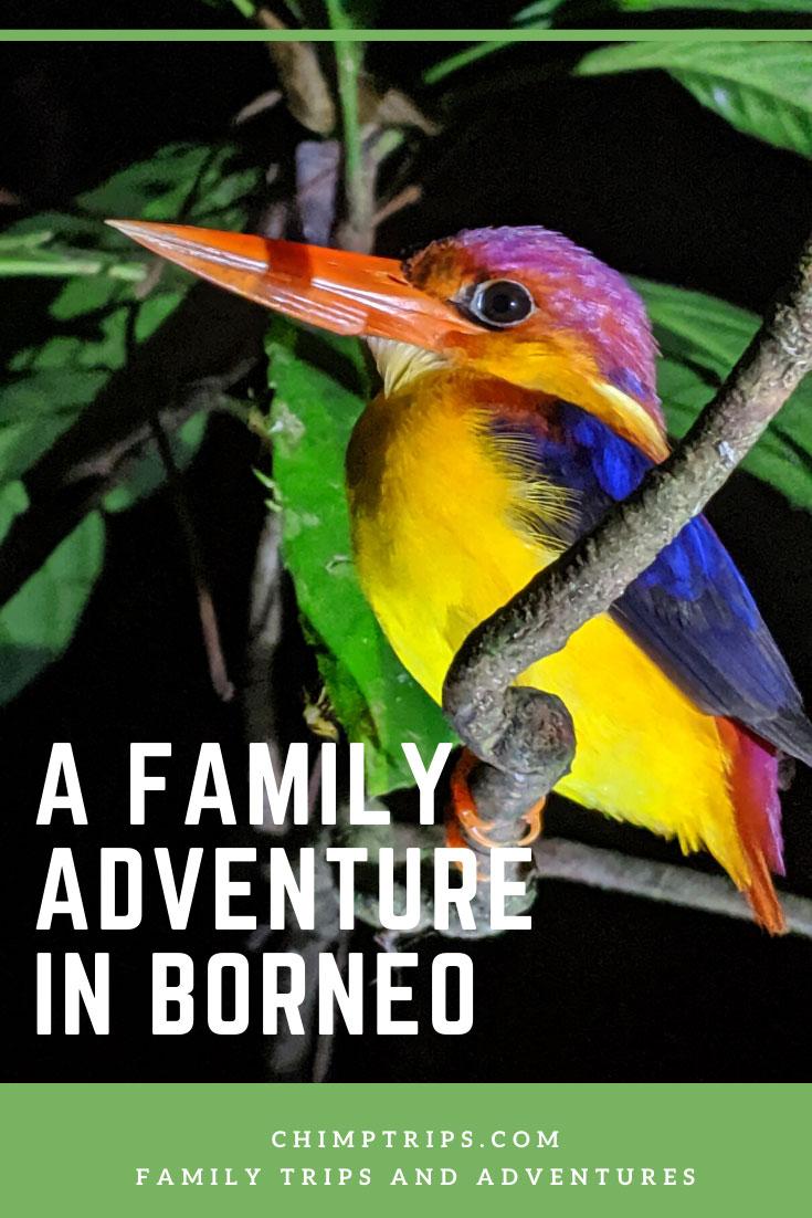 CHIMPTRIPS - A Family Adventure in Borneo