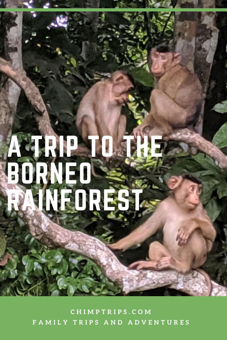 CHIMPTRIPS - A Trip to the Borneo Rainforest
