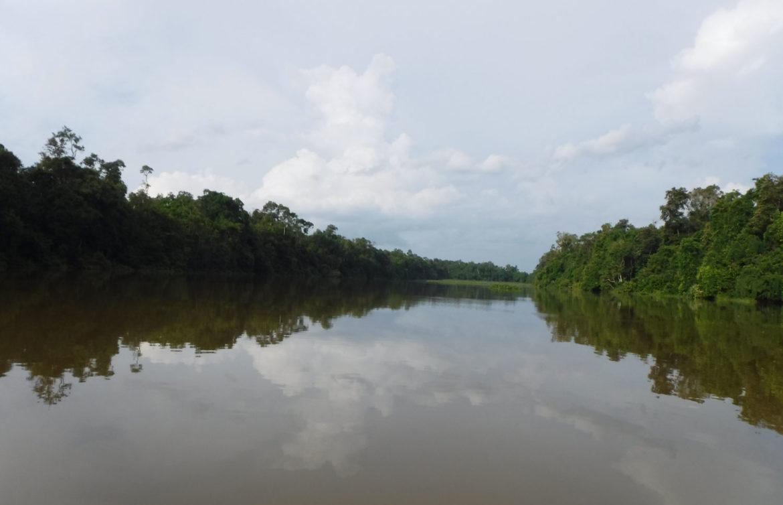 River Kinabatangan, Rainforest Safari, Borneo
