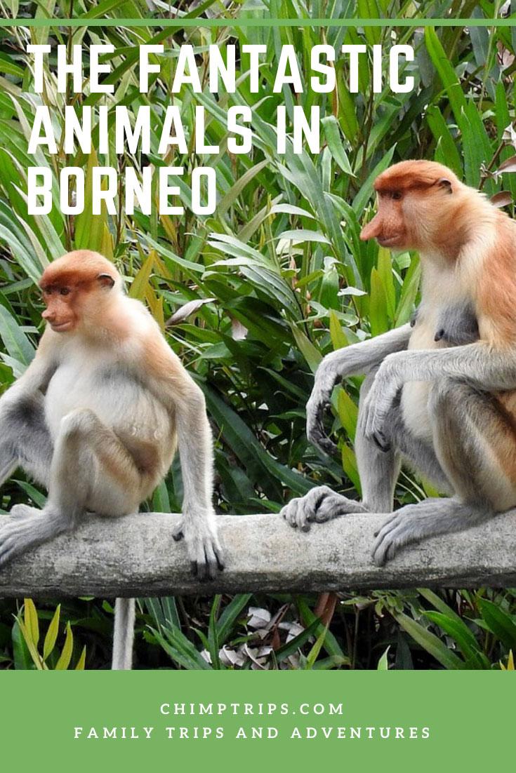 CHIMPTRIPS - The Fantastic animals in Borneo