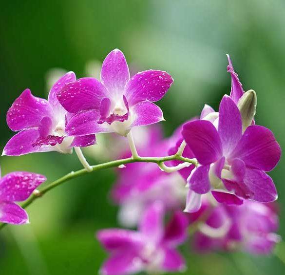 Orchids - Singapore Botanical Gardens