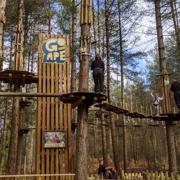 Image of the Go Ape aerial walkways at Moors Valley Country Park
