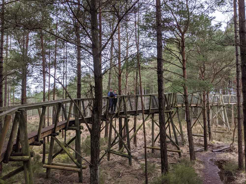 image of wooden walk walk moving into trees at Moors Valley Park