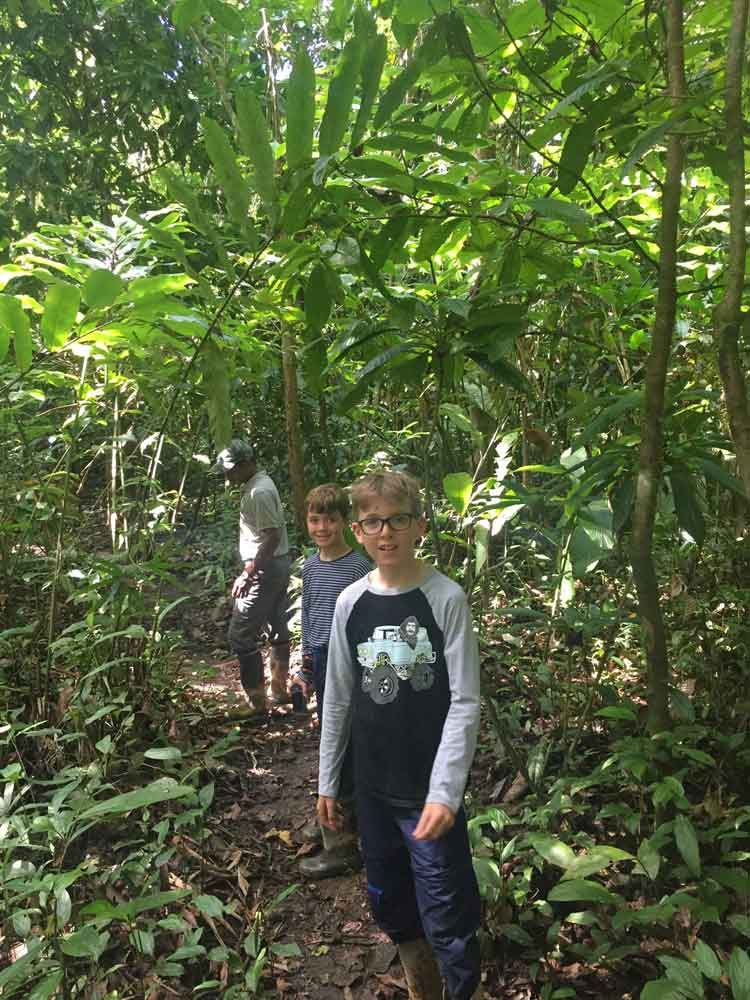 Taking a guided walk through Borneo Rainforest