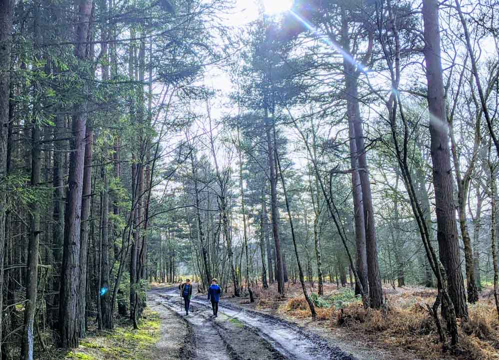 two boys walking along forest track amongst trees