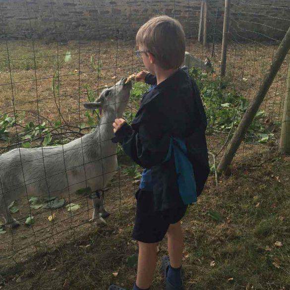 Boy Petting a goat at campsite