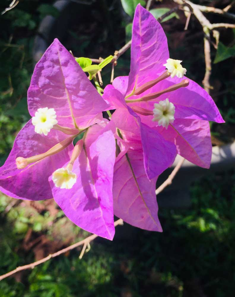 Beautiful purple Rainforest flower
