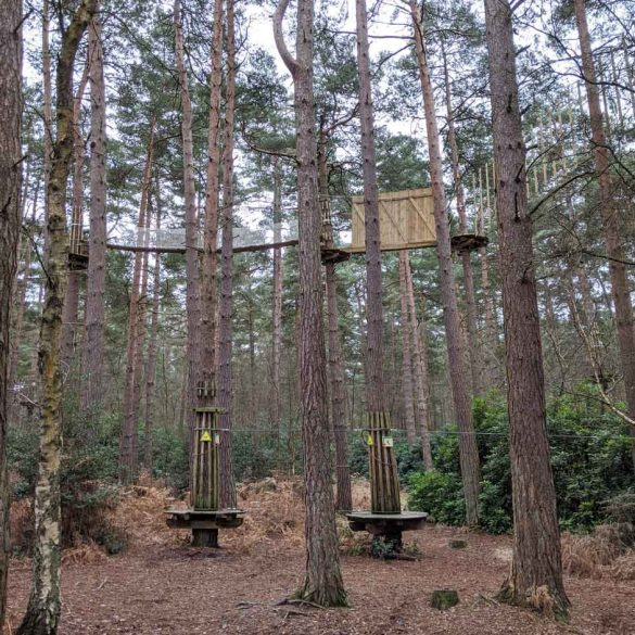 Go ape. Alice Holt, view of walking trails in trees