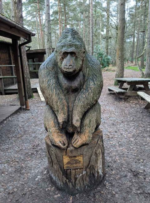 Large wooden carving of Ape at Go Ape, Swinley Forest