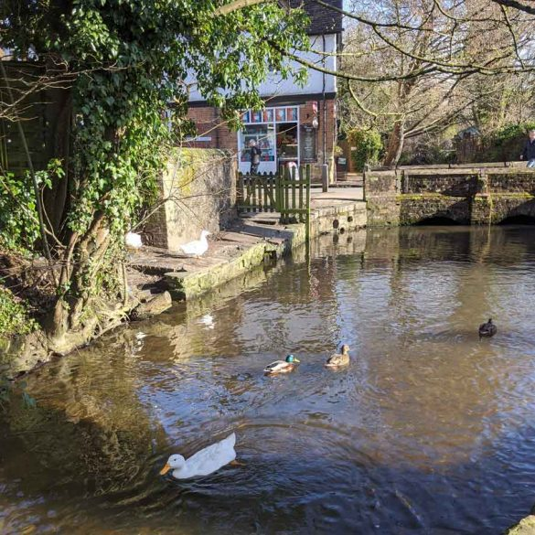 Ducks on River Tillingbourne at Shere