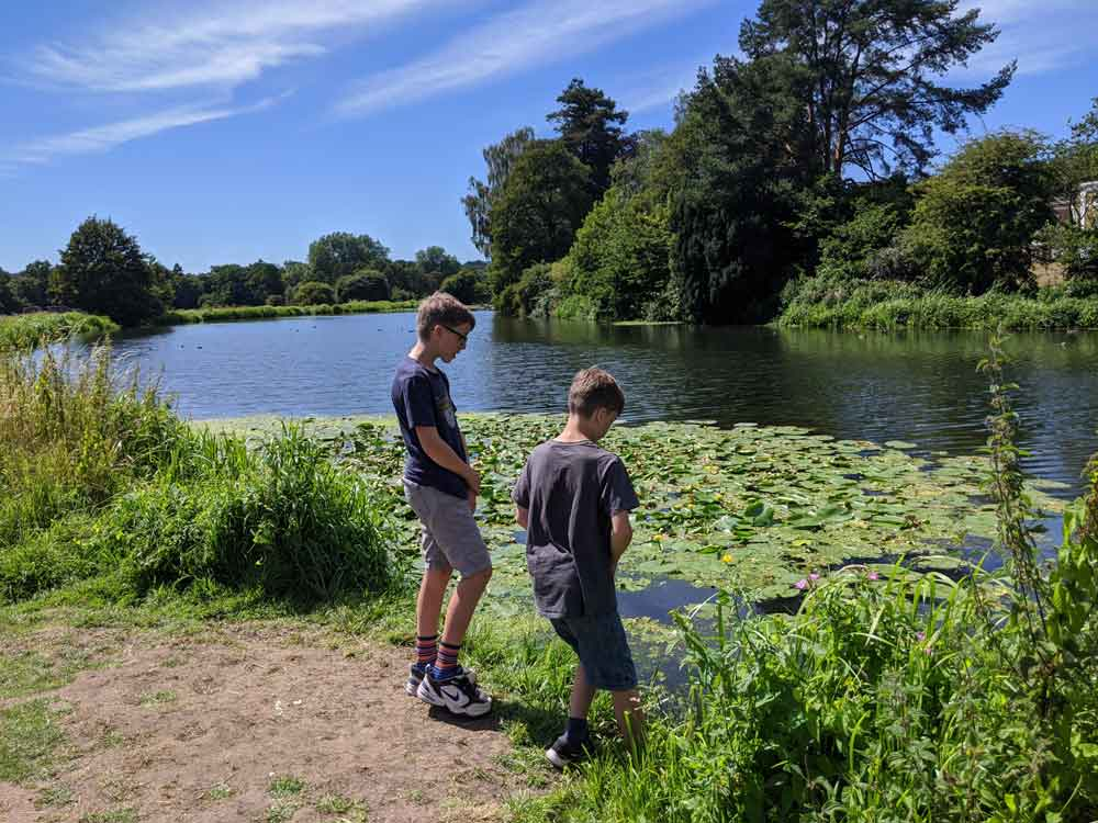 Boys testing strength of water lilies on part of River Wey, Surrey