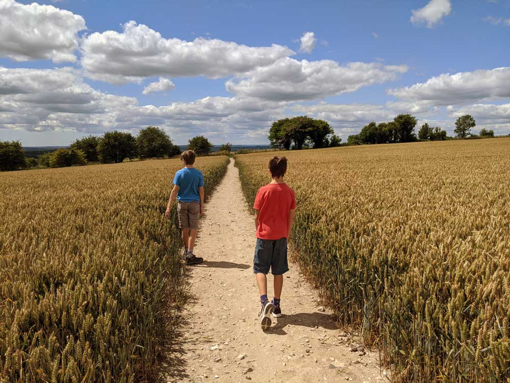 Two boys walking on path through corn field on the the South Downs way