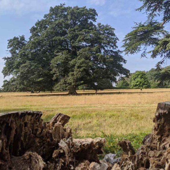 Blickling Estate Park Land for Walking