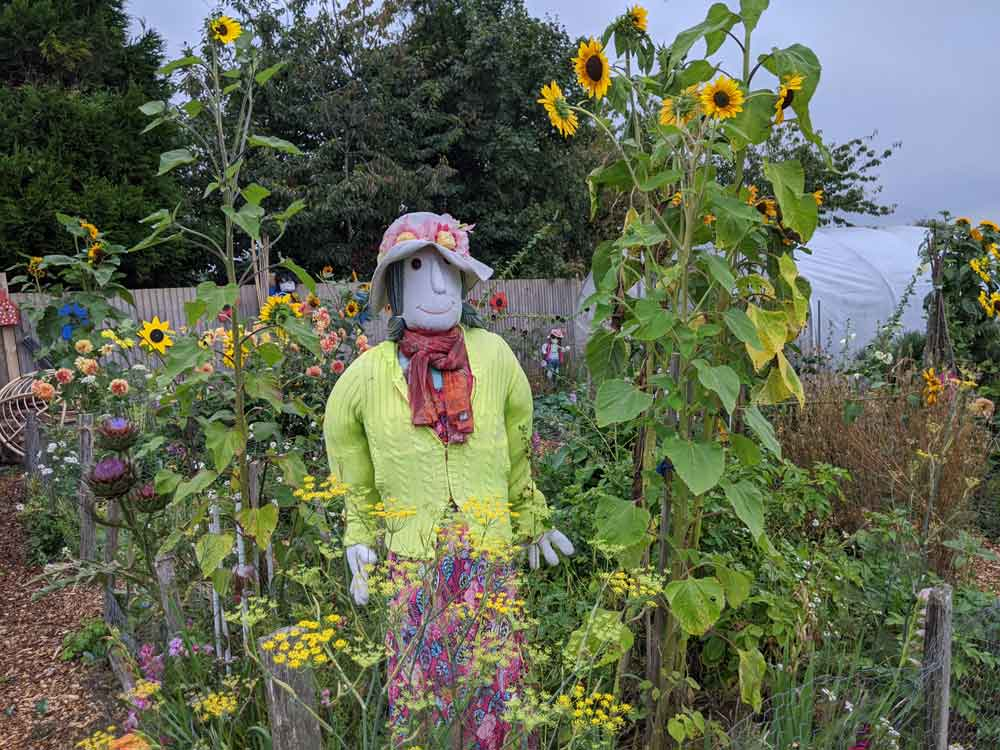 Friendly female Scarecrow dressed in bright colours surrounded by sunflowers at Freshwinds Farm Garden, Sussex