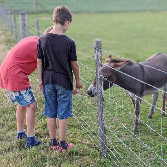 Two boys meeting the Donkey on the Farm Trail at Freshwinds Camping, Sussex