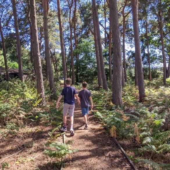 Boys walking in woods at the RSPB Nature Reserve, Farnham, Surrey