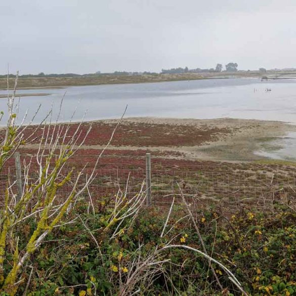 View across wetlands at Rye Nature Reserve, Rye, East Sussex, England