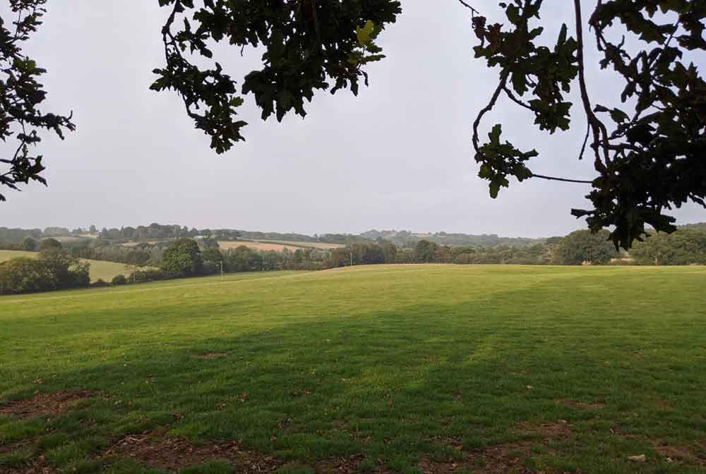 Views of green fields and woodland framed by oak tree branches at Freshwinds Camping, Sussex