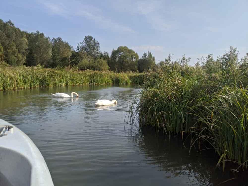 Boat Safari, WWT Arundel, Sussex