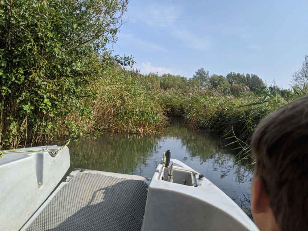 Arundel Wetlands Boat Ride, WWT Arundel, Sussex