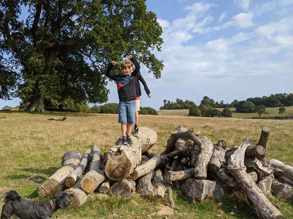 Boys climbing stack of tree trunks enjoying deer park walk, Petworth Park, Sussex