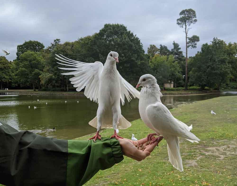 Feeding the birds at Claremont Gardens, Surrey