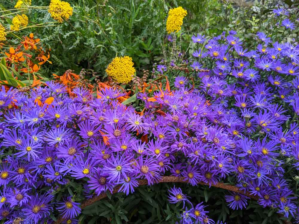 A splash of purple in the flower beds at the Petworth House Pleasure grounds, Sussex