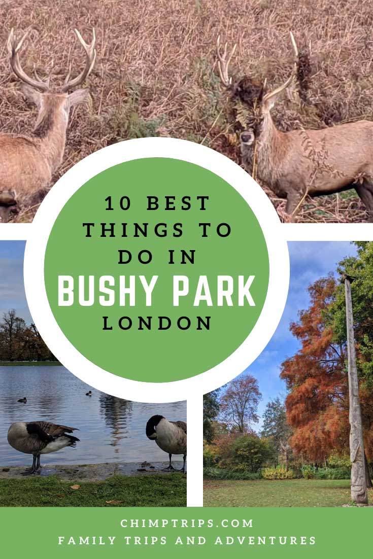 Pinterest: 10 best things to do in Bushy Park, London, UK