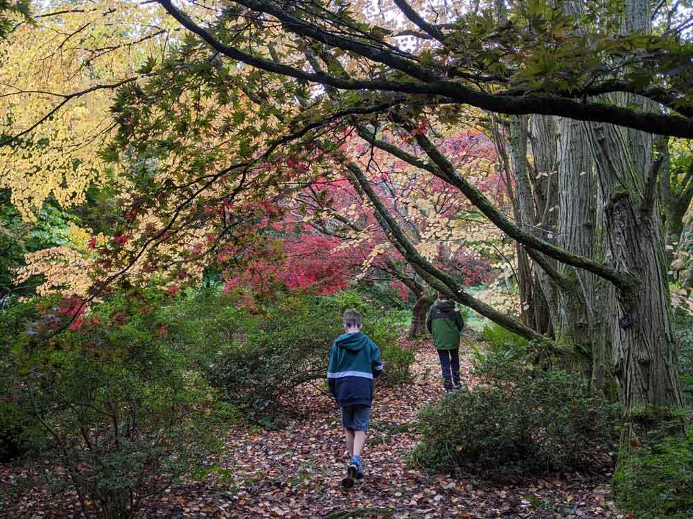 Autumn Colours at Winkworth Arboretum, Goldaming, Surrey