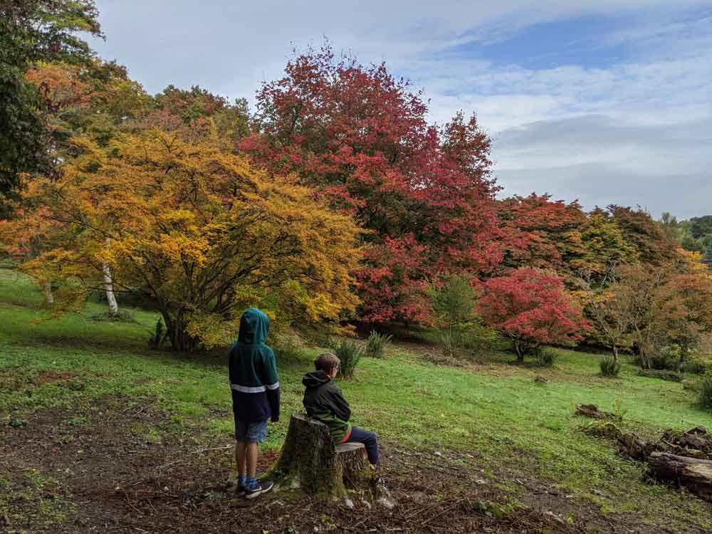 Boys looking at the reds, oranges and yellow of autumn trees at Winkworth Arboretum, Goldalming, Surrey