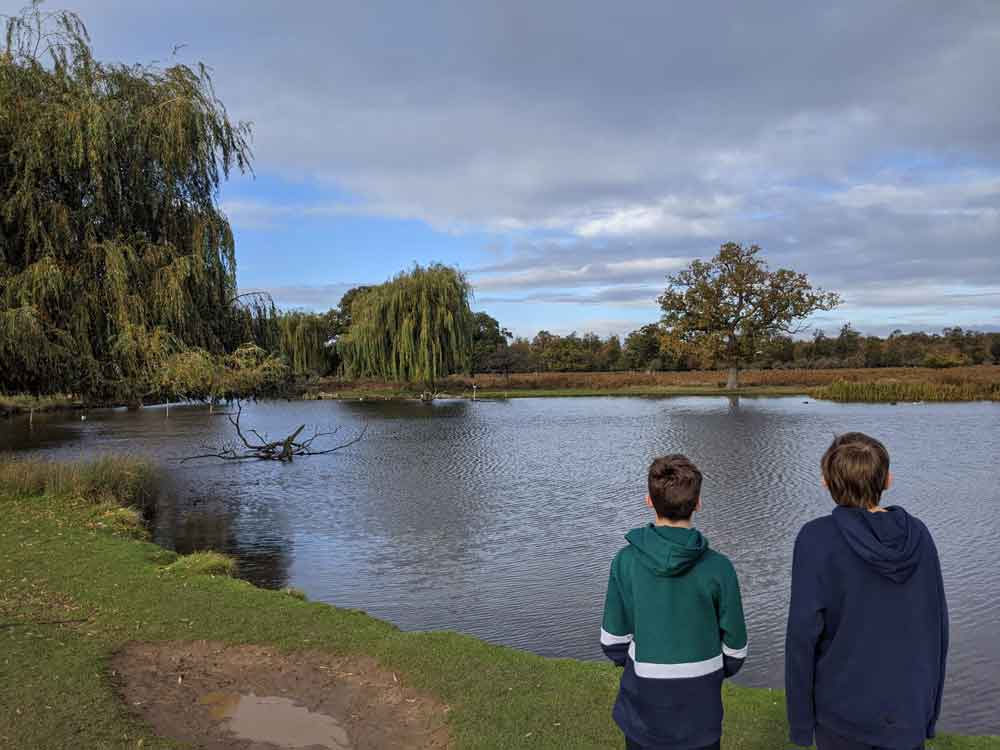 Two boys looking at Heron pond, Bushy Park, London, UK