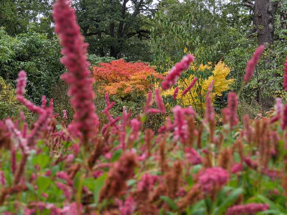 Isabella Plantation, Richmond Park, London, UK