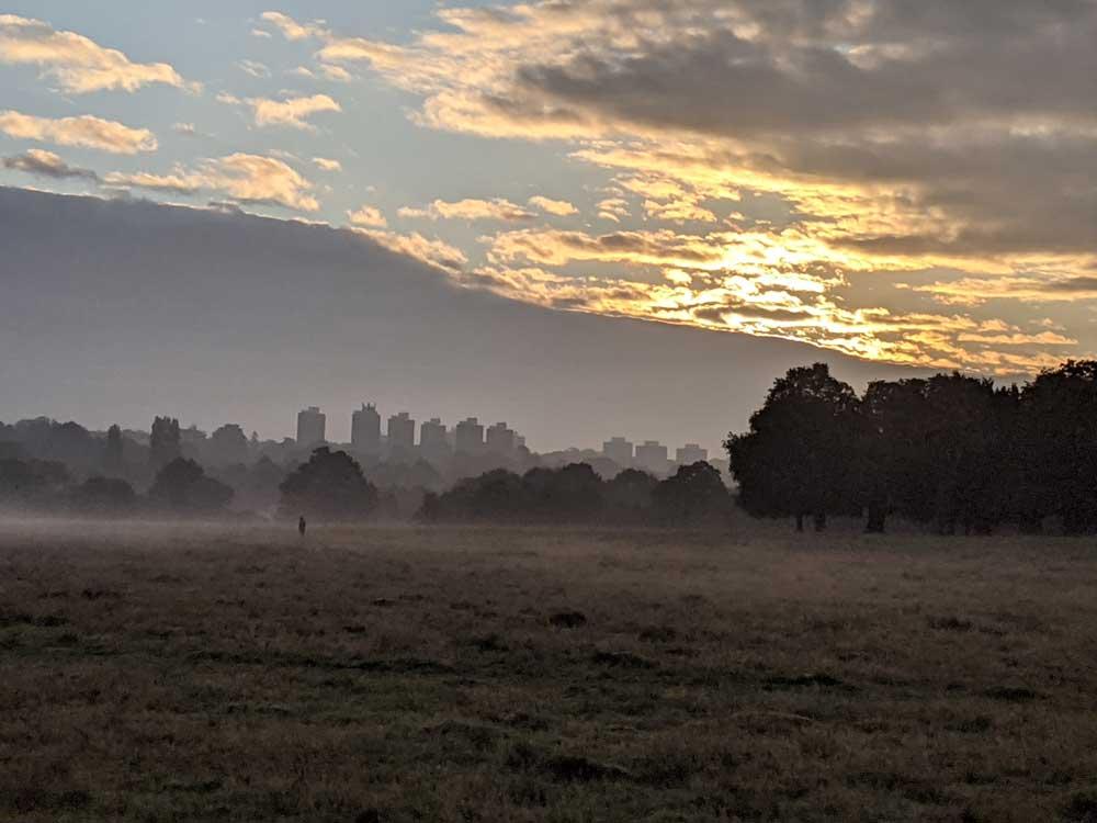 Mist at Richmond Park, London, UK