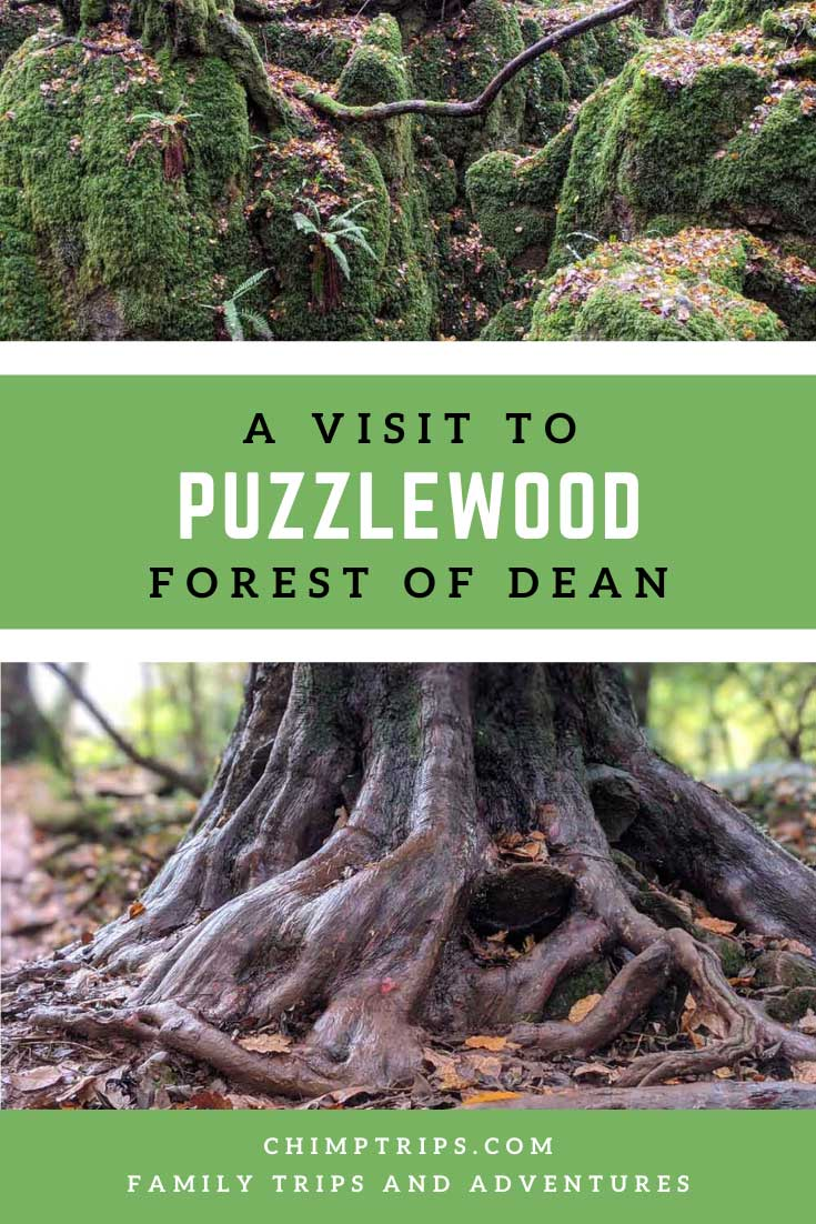 Pinterest: A Visit to Puzzlewood, Coleford, UK