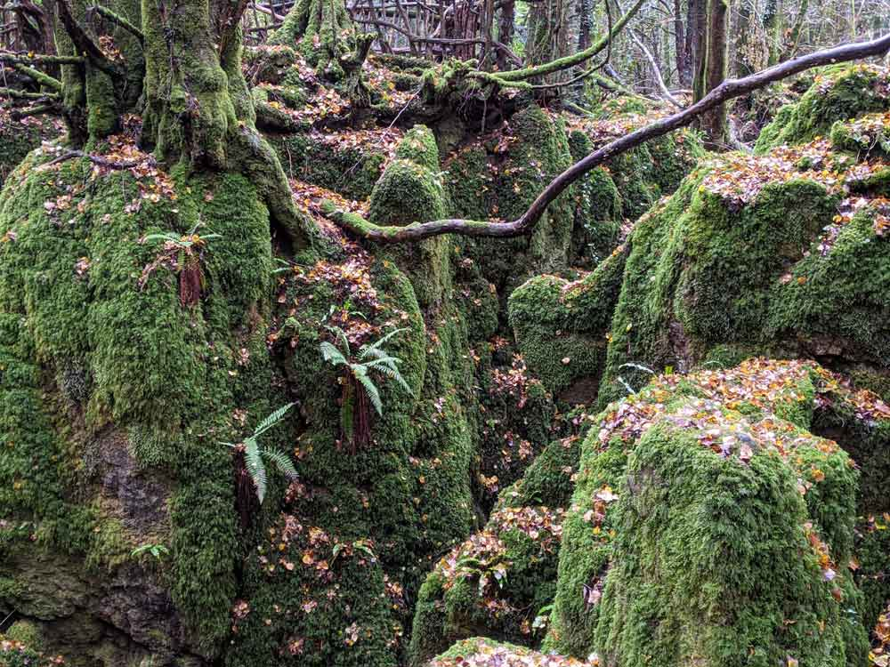 Magical Puzzlewood. Coleford, Forest of Dean, UK