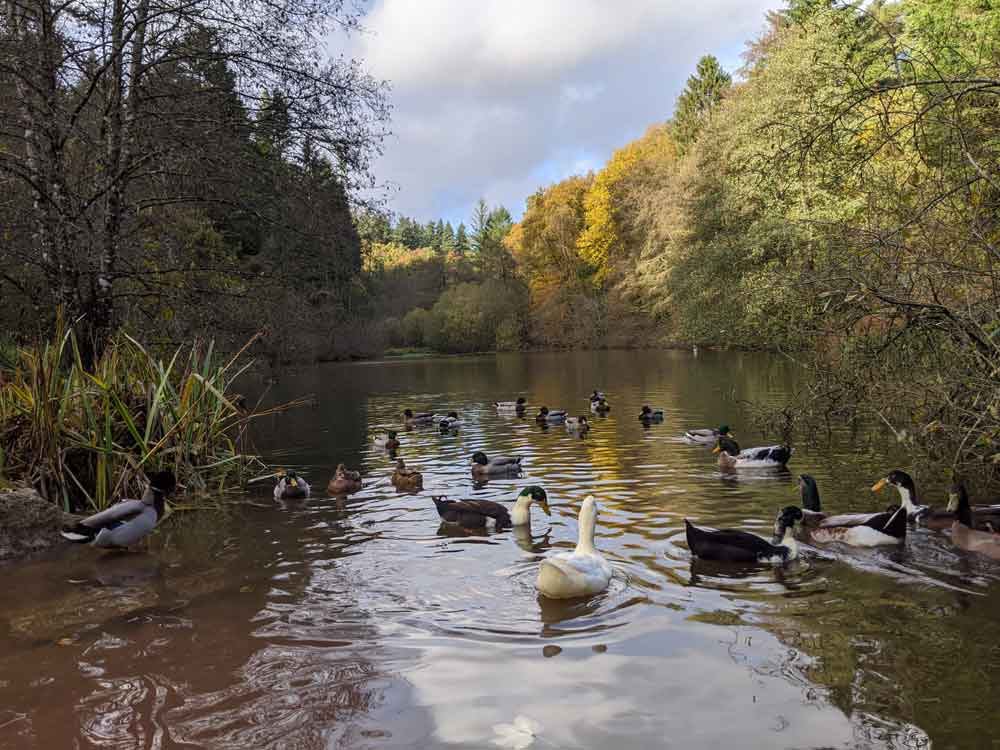 Soudley Ponds, Forest of Dean, Gloucestershire, UK
